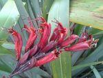 Ngutunui: flowers