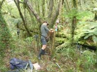 Setting up a transect to measure seedfall and stick insect eggs in the Tararua Ranges