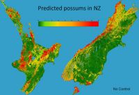 Predicted number of possums per hectare in the 'National Possum Model', under a scenario of no possum control. Provided by James Shepherd