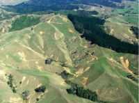 Shallow landslides affecting soil C stocks in hill country near Raglan.