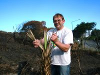 Dr Colin Meurk expects some of the burnt plants, like this cabbage tree, will regenerate.