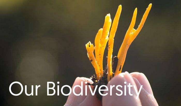 Our Biodiversity