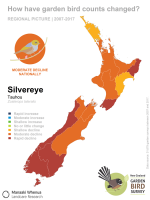 Regional picture: changes in silvereye counts