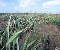 Wetlands, Chatham Islands