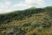Ultrabasic boulderfields (centre) near Junction Hill, Gorge River, South Westland, with red tussock (<em>Chionochloa rubra</em>) and pink pine (<em>Halocarpus biformis</em>) (Rowan Buxton)