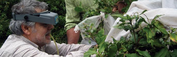 Managing invasive weeds, pests & diseases