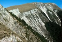 Calcareous cliffs on Ben More, Marlborough, with silver tussock (<em>Poa cita</em>) and <em>Myosotis arnoldii</em> (Peter Williams)