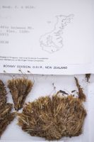 Specimen collected by JH Sorensen