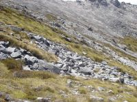 Granite boulderfield, Lookout Range, NW Nelson (Susan Wiser)