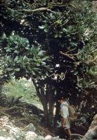 The last wild plant on Manawa Tāwhi