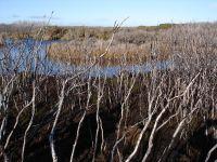 Awarua Wetland
