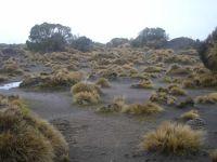 Volcanic dunes of the Rangipo ´Desert´, with widely spaced bristle tussock, <em>Rytidosperma setifolium</em> and islands of shrubby vegetation (Susan Wiser)