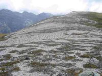 Granite sand plain on the Lookout Range, NW Nelson (Susan Wiser)