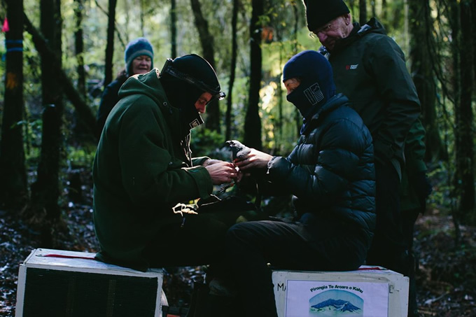 Dave Bryden and the team banding the bird in preparation for translocation.