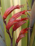 Motu-o-nui: flowers