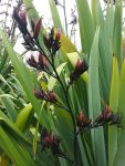 Waihirere: seed pods and flowers