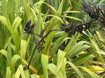 Mawaru: seed pods