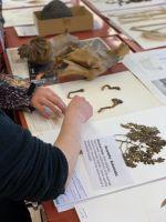 Ines Schonberger teaching rangatahi about the different specimens in the Allan Herbarium