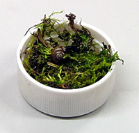 Lid with sphagnum