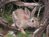 Rabbit (Photo: Antonio Castro)