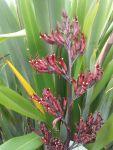 Paretaniwha: flowers