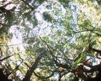 Canopy assessment