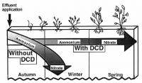The influence of a nitrification inhibitor (dicyandiamide--DCD) on the rate of N<sub>2</sub>O being released from soils receiving effluent.