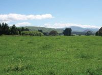 Model includes seasonal variations in pasture growth and N uptake rates.