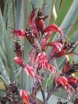 Te Tatua: flowers