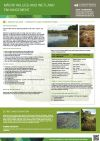 Poster: Maori values and wetland enhancement