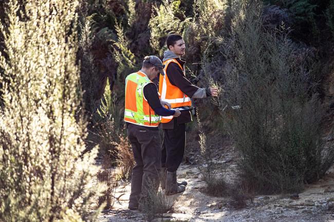 Morgan Coleman and intern Taina Ngarimu-Goldsmith selecting mānuka tree samples