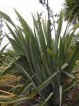 Waihirere: bush