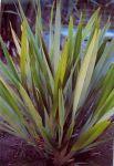 Tākirikau: young bush