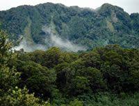 Rata forest. Image – John Hunt.